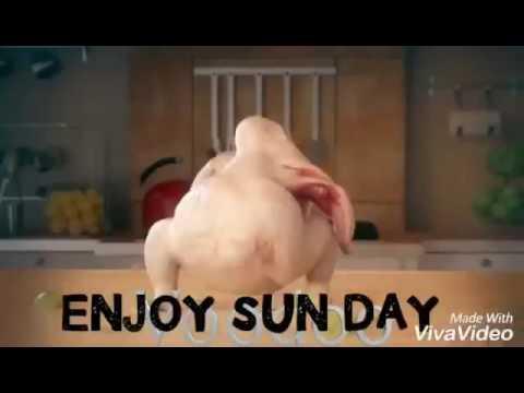 Funny Cheken Happy Sunday Youtube