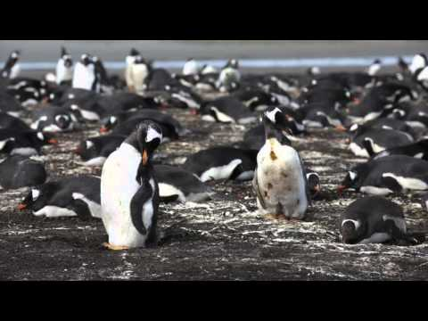 Tour of Port Stanley on Falkland Islands
