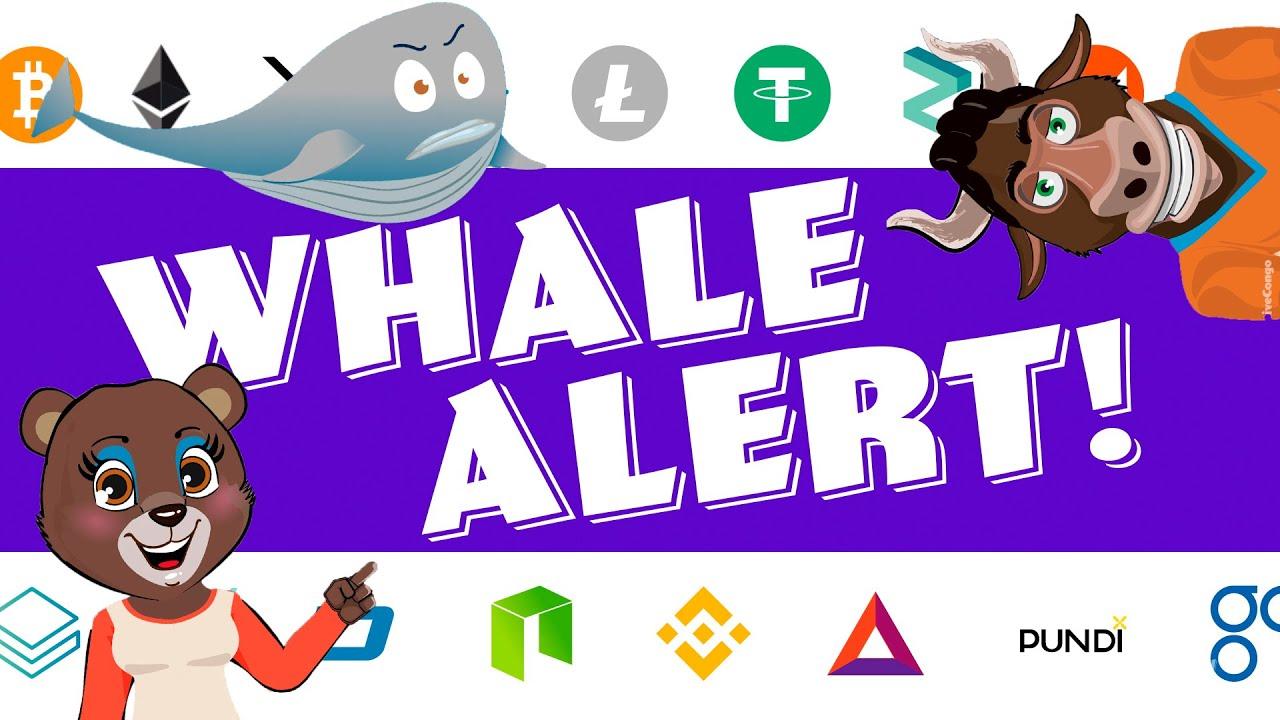 CrypTV 1 - Whale Alert!