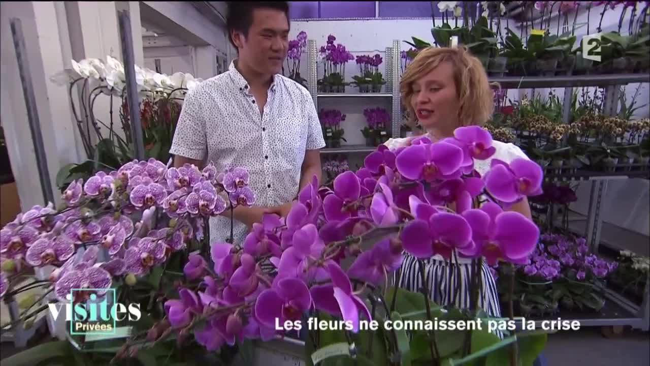 Download La folie des orchidées - Reportage - Visites privées