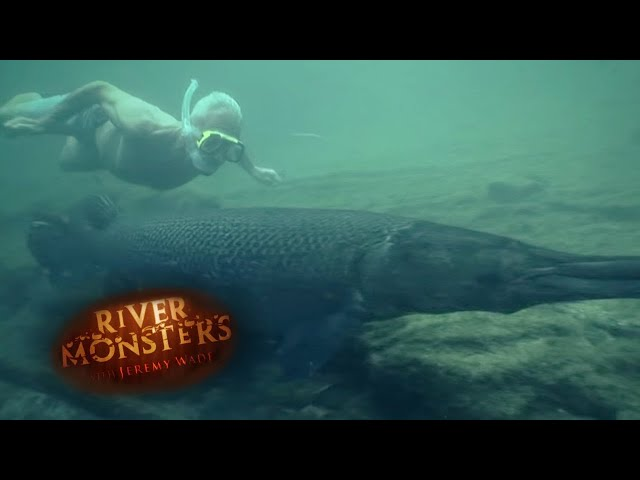Will Alligator Gars Attack Humans? – River Monsters