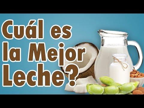 Leche de Soya, Coco, Almendras o de Vaca ¿Cuál es la Mejor? | SALUDABLEMENTE TV
