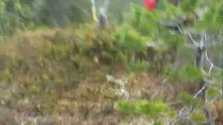 Spor m/Capri (Brown Hunt