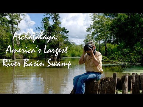 Atchafalaya: America's Largest River Basin Swamp