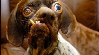 Самые маленькие собаки в мире фото