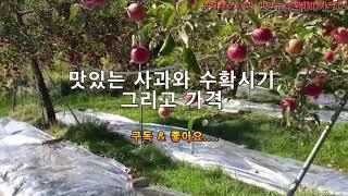 맛있는사과와 수확시기 그리고 가격