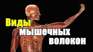 видео Типы мышечных волокон и лучшие упражнения для их тренировки