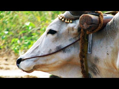 Life in Rural Tamil Nadu | Travel Tamil Nadu