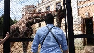 Руски жираф се влюби в българин. Русский жираф влюбился в болгарина