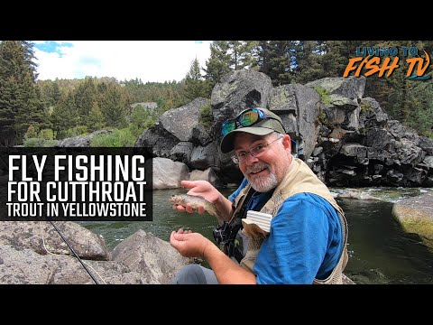 Fly Fishing for Cutthroat Trout in Yellowstone