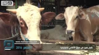 مصر العربية | إقبال كبير على سوق الأضاحي بإندونيسيا