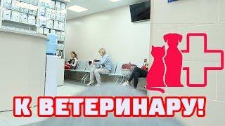 ВЕТЕРИНАРНАЯ КЛИНИКА | ДОДЕЛАЛИ КУХНЮ!