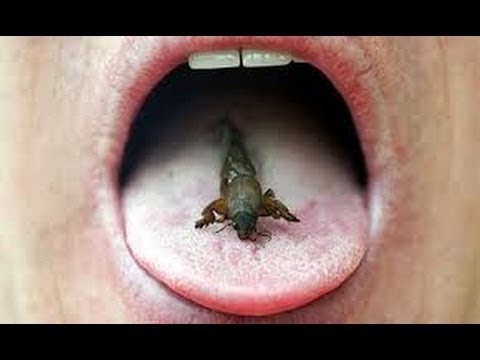 Can Eating Insects Save the World BBC full Documentary 2013 ( Insect eating animals)