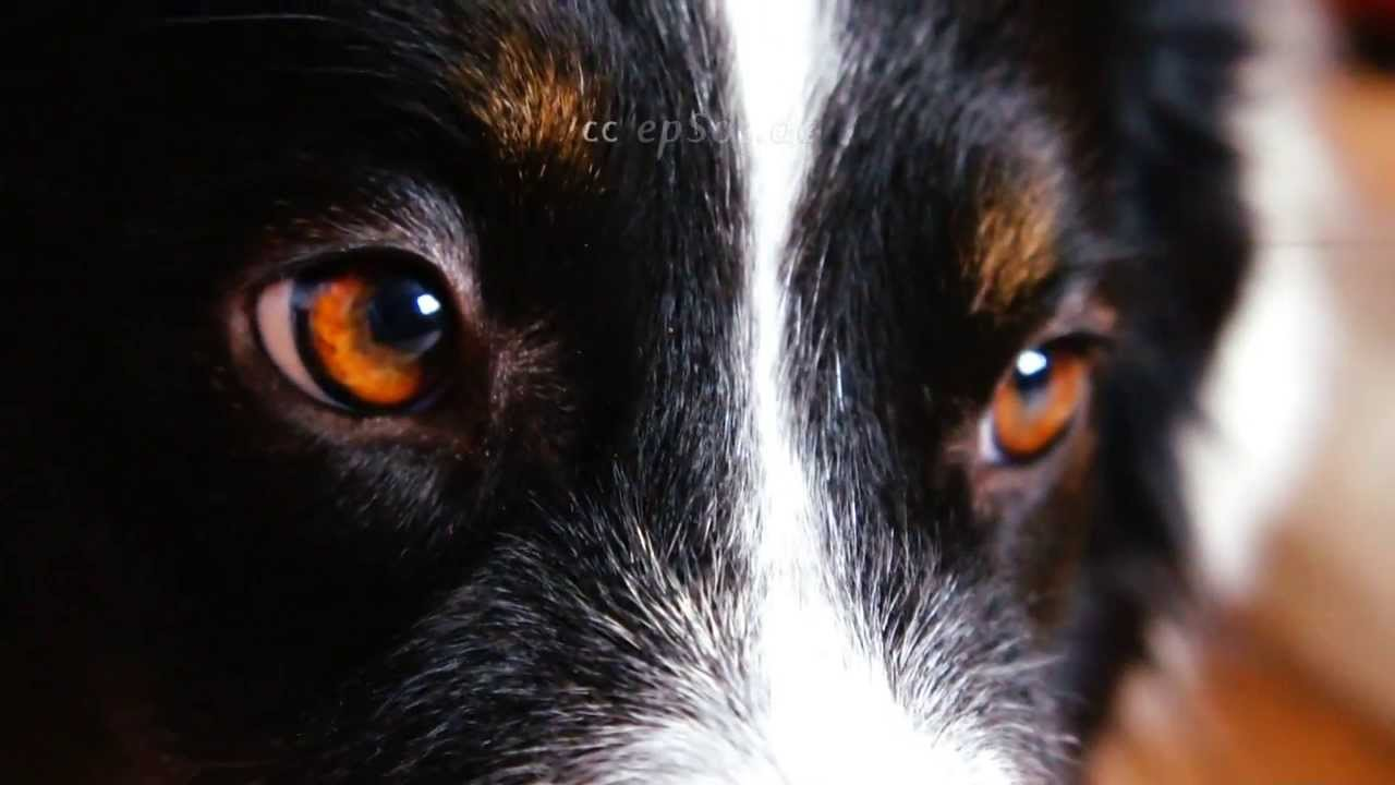 Looking Into Dogs Eyes