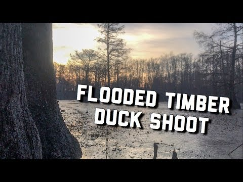 Flooded Timber Mallard Hunt | Alabama Duck Hunting