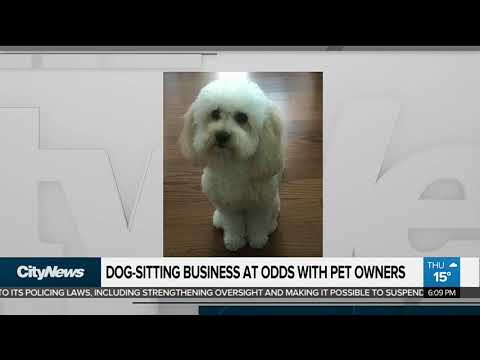 Concerns surround Toronto dog walking business