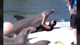 has-a-woman-ever-had-sex-with-a-dolphin-asian-with-ass-vids
