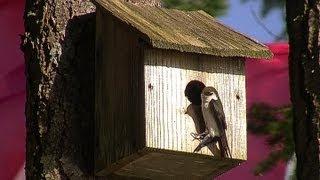 Birdhouses 102