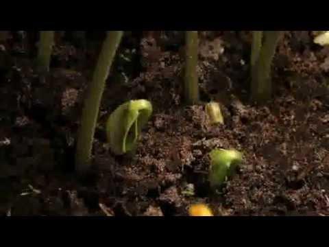 Seeds of Freedom spa subs / Semillas de Libertad subs esp