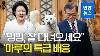"""""""멍멍, 잘 다녀오세요"""" '마루'의 특급 배웅 / 연합뉴스 (Yonhapnews)"""