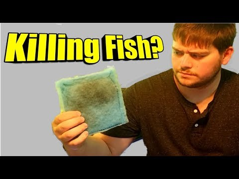 Why An Aquarium Filter Cartridge Replacement Is Killing Your Fish