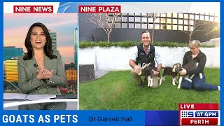 9 Live Perth - Goats as pets