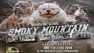 AMERICAN BULLY DOG SHOW FEB 23RD WRYNESVILLE,NC BRC GLOBAL