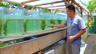 Fish Farming│ Inside the most successful EXOTIC GUPPY FARM! A young man survive by selling guppies