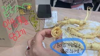 [금산인삼마을Daytrip] 인삼+꽃술이 아닌 '인삼꽃…