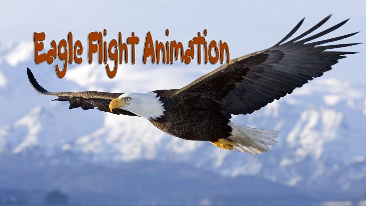 Eagle Flight Animation