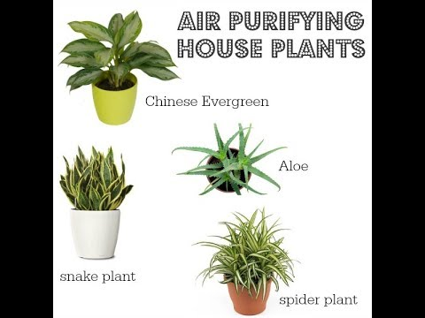 Anti Smog Plant Air Purifier Pollution Control Indoor