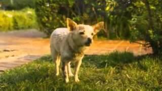 Una Chihuahua de Berverly Hills 2