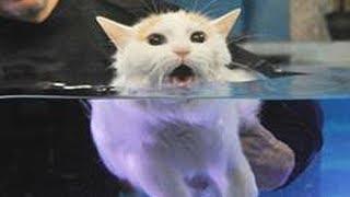 Kedinlerin Neden Sudan Korktuğunu Bİliyor musunuz? Sebebini Öğrenince Çok Şaşıracaksınız !!