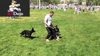 K9dojo: Walk With Israel Toronto 2012 K9dojo Dog Training