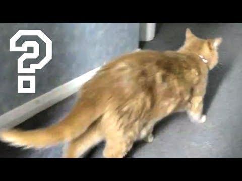cat with sword