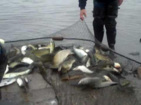 Fish Haul 2- Netting Fish on the Delaware River 5-5-09