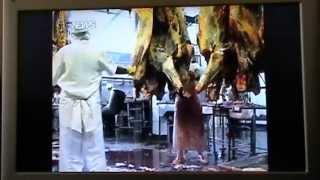 Documentario Carne e Osso Parte 1/2