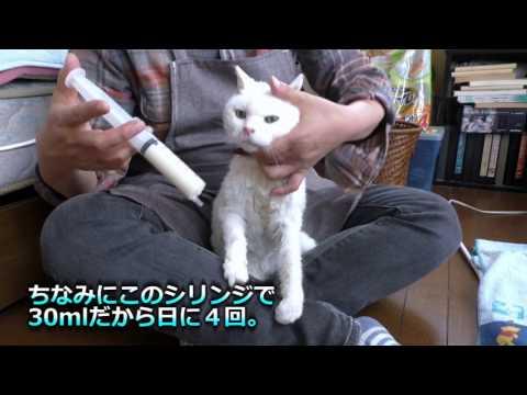 【地域猫】強制給餌は、拷問のようで心が痛い。【魚くれくれ野良猫】