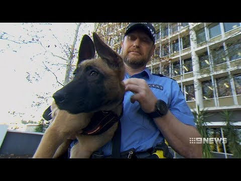 Dog Squad | 9 News Perth