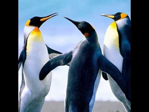 นกเพนกวิน - YouTube