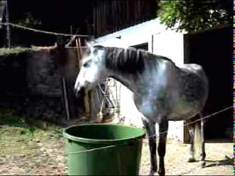 pferd-putzt-zähne-in-regentonne