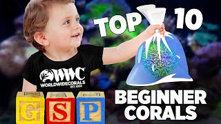 Top 10 Corals f๐r Beginners - World Wide Corals