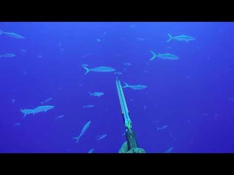 Diving Niue // 2017