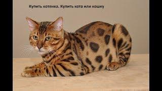 Купить котенка. Купить кота или кошку