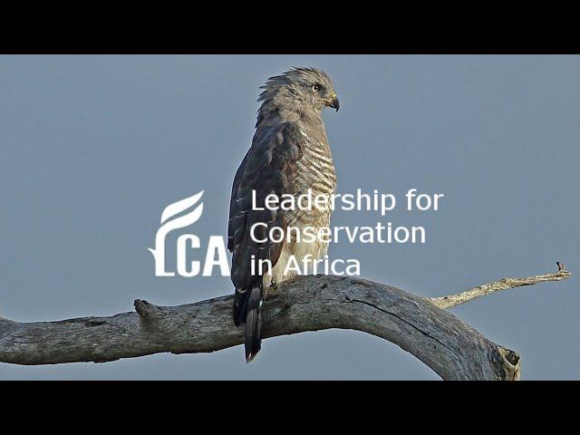 South Africa's rarest snake eagle
