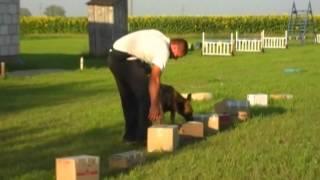 Detection Dog Training Martin –7