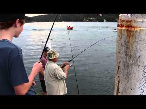 Catching Aussie Salmon Land Based In Sydney