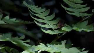 神戸、押部谷で撮影した映像 music:Burial I created this video with t...