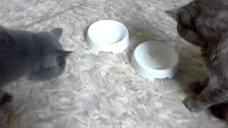 коты любят омегу(3)