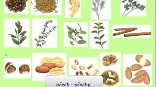 Изучение чешского языка - Видеоурок VS5.avi